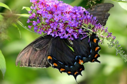 Colors; in patterns on a butterfly or the flower it lands on.